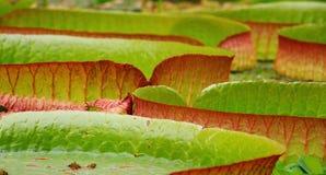 Leaf, Vegetation, Close Up, Flora Stock Image
