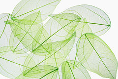Leaf vein texture background Stock Photography