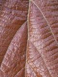 Leaf veins Stock Images