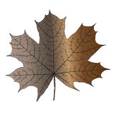 Leaf With Veins - Colour Stock Images