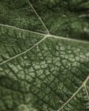 Leaf Veins. An extreme close up macro shot of a leaf showing its veins stock image