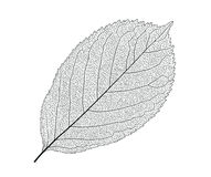 Leaf With Veins Stock Photography