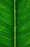 Leaf veins, macro. Plant structure pattern with selective focus. Nature vertical background, wallpaper