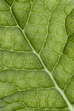 Leaf veins macro Royalty Free Stock Photography