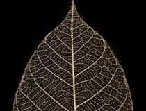 leaf veins pattern Stock Photos