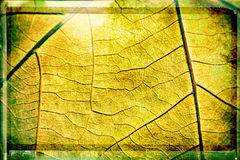 Leaf veins texture Stock Photography