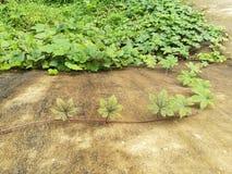 Leaf, vine, trees, plants, background, garden royalty free stock photo