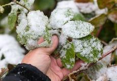 Leaf w śniegu w ręce na naturze Fotografia Stock