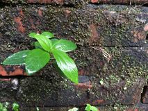Leaf on the wall. Leaf wall moss moisture Stock Photo