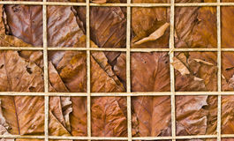 Leaf wall texture Royalty Free Stock Photography