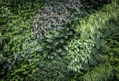Leaf wall texture Stock Photos