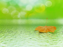 Leaf in water Stock Image