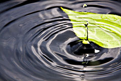 Leaf on Water 2. Leaf on water and water droping Royalty Free Stock Image