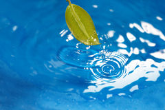 Leaf and water Royalty Free Stock Photo
