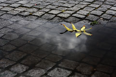 Leaf in the Water. Yellow leaf floating in a water puddle after some heavy rain. The reflection of a cloud can still be seen on the water Royalty Free Stock Photography