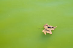 Leaf on water Stock Image