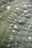 leaf water Στοκ Εικόνες