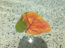 Leaf in water Royalty Free Stock Photo