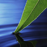 Leaf in water Stock Photos