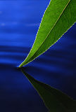 Leaf in water Stock Photo