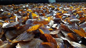 Leaf, Water, Autumn, Deciduous Royalty Free Stock Photos