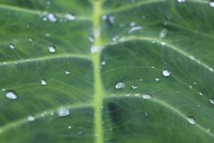 Leaf With Water Dew on Top Royalty Free Stock Photos