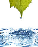 Leaf with water drop Stock Photos