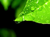 Leaf water drop 13 Stock Images