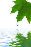 Leaf and water drop Royalty Free Stock Photo