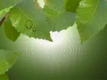 Leaf and water drop. Over a green river and green leaves with dews royalty free stock photography