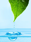 Leaf with water droplet Royalty Free Stock Images