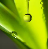 Leaf with water droplet. Stock Photography
