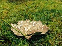 Leaf Stock Images