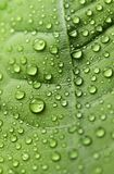 Water drops on green leaf up close. Macro droplets. Leaf with water droplets in macro. Beautiful details in nature royalty free stock image
