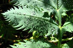 leaf with water drops 3 Royalty Free Stock Photography