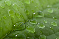 Leaf with water drops. Background Stock Photos