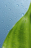Leaf & water drops Royalty Free Stock Images