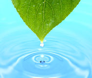 Leaf with water drops. Leaf and beautiful splash of water drops Stock Image
