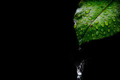 Leaf with water drops Royalty Free Stock Image