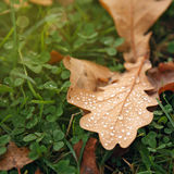Leaf with water drops on the grass Royalty Free Stock Photos