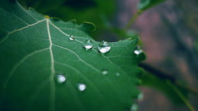 Leaf with water drops. Leaf with lovely little water drops on it Royalty Free Stock Images