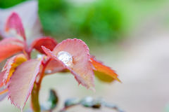 Leaf and water drops Royalty Free Stock Photos