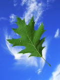 Leaf with water drops on sky background Royalty Free Stock Photo