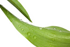Leaf with water drops Stock Photos