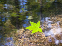 Leaf on Water Royalty Free Stock Photography