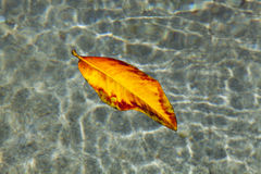 Leaf in the Water Stock Photos