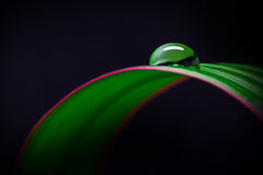 Leaf with water pearl Royalty Free Stock Photography