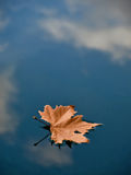 Leaf in water (puddle). One lonely brown dry  leaf floating on the clear blue-cyan water surface. In reflection on the water can see the reflection of clouds and Royalty Free Stock Image
