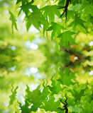 Leaf water reflection. Natural image of green tree leaf water reflection Stock Photo