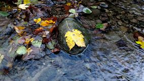 Leaf in water stock footage